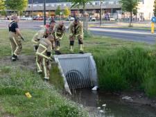 Hengelose brandweer redt voor de vierde keer eenden uit duiker