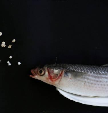 Wetenschappers vinden negen soorten plastic in menselijke ontlasting
