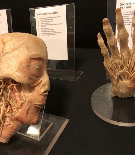 Naar Real Human Bodies in Zwolle als  biologieles