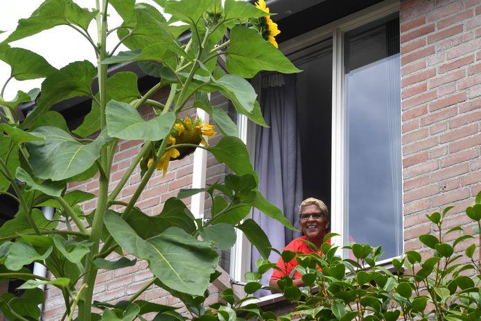Sonja Mohan kijkt vanuit haar slaapkamerraam tegen de zonnebloem aan, precies zoals ze bedacht had.