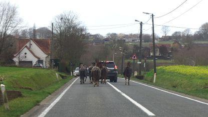 Loslopende paarden in Langestraat