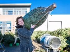 Sorteermachine afvalverwerker loopt vast door kerstboomnet