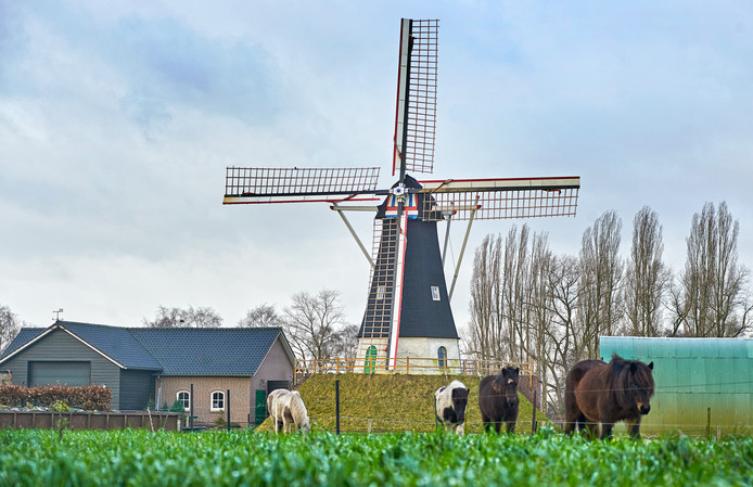 """Molen De Hoop in Keldonk behoort tot de 5 mooiste plekken van Meierijstad. Deze locatie werd ingezonden door Frans Kuijpers. ,,De betekenis van dit monument reikt verder dan de stenen alleen."""""""
