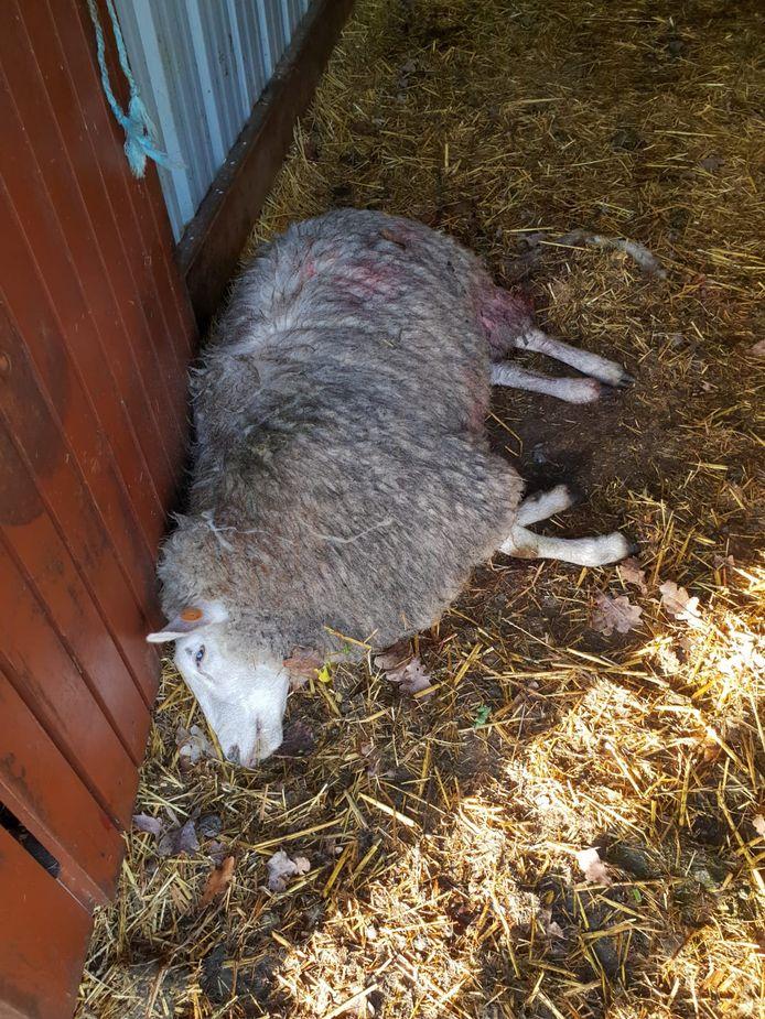 De gruwelijke beelden in Kattenbos