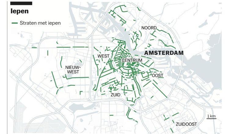 De straten met iepen in Amsterdam. Beeld Chantal van Wessel