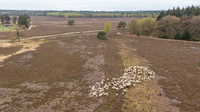 De bossen en heide van de Renderklippen tussen Heerde en Epe