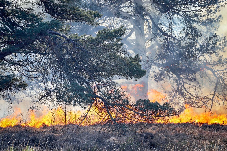 In het Mensingebos in Drenthe woedde zondag een grote natuurbrand. Een groot aantal brandweerkorpsen uit de wijde omgeving is opgeroepen om de brand te blussen.