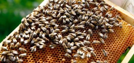 Duizend euro voor de bijen van Buren