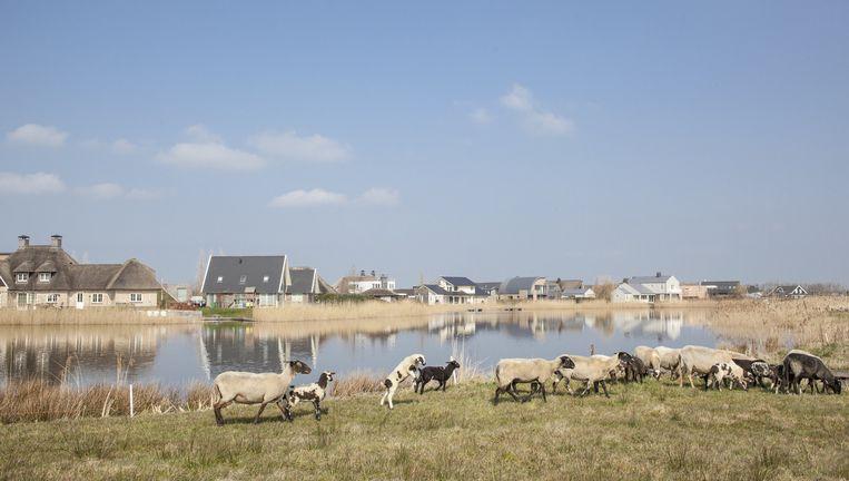 Blauwestad in Oost-Groningen. Het verleden blijft het geplaagde project achtervolgen. Beeld Harry Cock