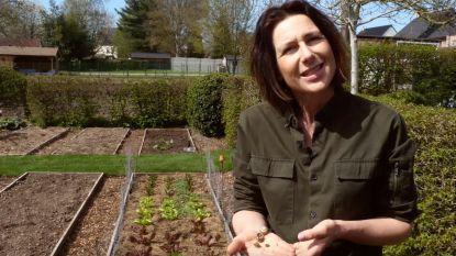 Iedereen Tuinier: Zo krijg je minder slakken in je tuin
