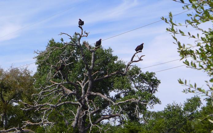 Gieren in de bomen van de lijkenboerderij in Texas