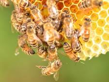 Tubbergen zet zich in voor bijenstand