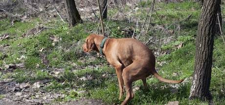Hondenbezitters moeten nu overal in Hengelo poep opruimen