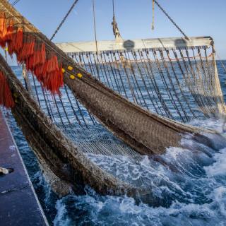 Spanningen tussen pulsvissers en kustvissers over vangst in ondiep water