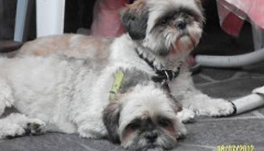 De hondjes die Berend Smit uitliet toen hij werd doodgeschoten.
