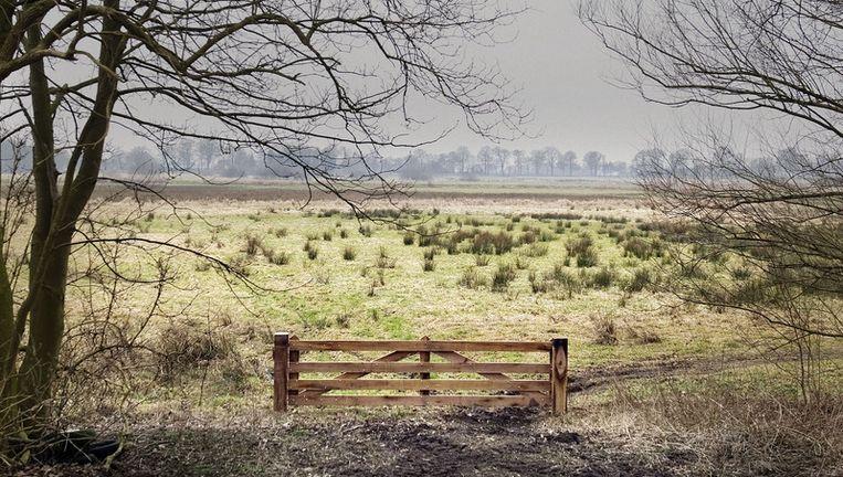 Het oost-groningse dorp wedde. Foto: reyer boxem Beeld