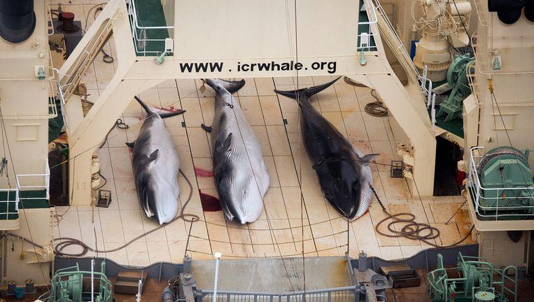 Drie walvissen aan boord van een Japanse walvisvaarder. Beeld ap