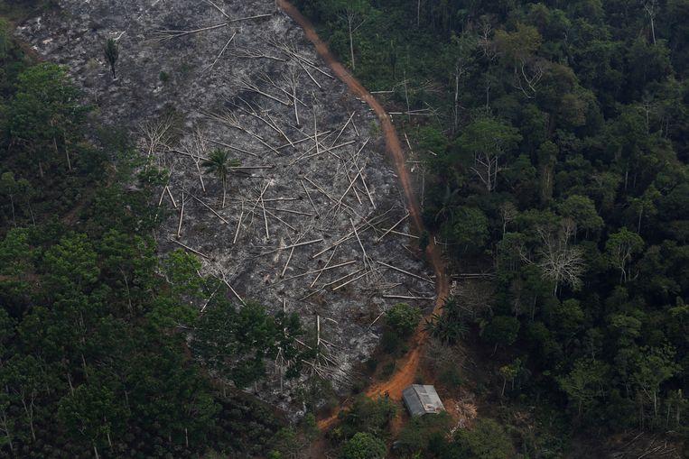 Sinds het aantreden van Bolsonaro wordt er nog meer gekapt in het Amazonewoud.