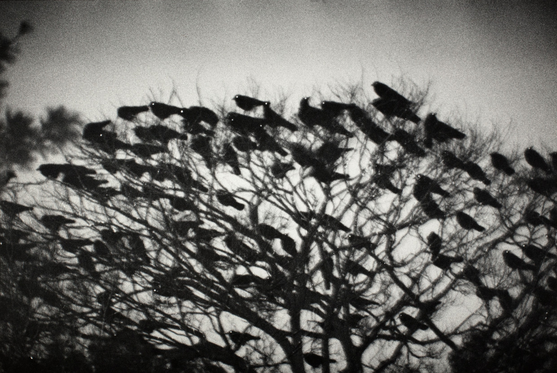 Kanazawa (1977), uit de serie Ravens van de Japanse fotograaf Masahisa Fukase (1934-2012). Beeld null