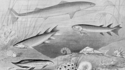 Wetenschap verklaart waarom 374 miljoen jaar geleden bijna al het leven uitstierf
