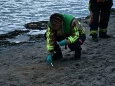 Bijtende chemische stof op strand in Zevenhuizen bezorgt hond brandwonden