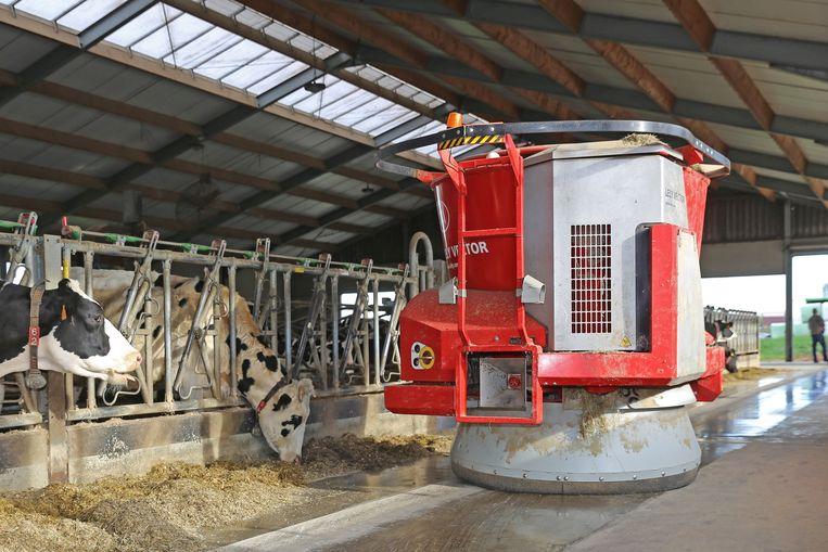 De voederrobot in actie in de stal van de melkkoeien.