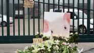 Uitbater van omstreden slachthuis in Tielt verschijnt maandag voor de rechter
