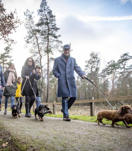 Kerstwandeling met teckels over Hulsbeek verbroedert heel Nederland