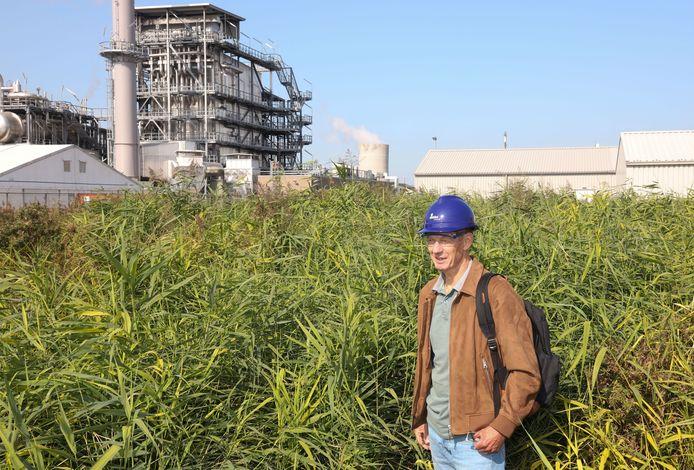 Niels Groot, waterspecialist van Dow, in het wetland met riet waarmee Dow en waterbedrijf Evides experimenteren om afvalwaterstromen natuurlijk en energiezuinig te zuiveren; in de verte de koeltoren van Dow.