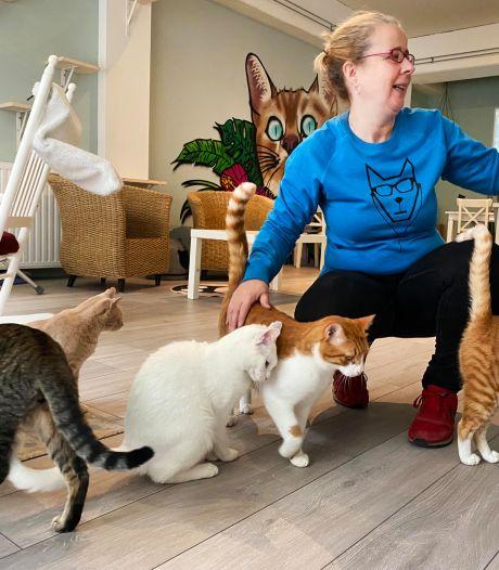 Rammelend snoepdoosje doet wonderen om 'medewerkers' eerste Tilburgse kattencafé te motiveren