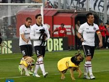 Spelers Chileense club niet met kinderen maar met hondjes het veld op