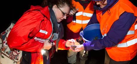 Padden foppen vrijwilligers in Heeze en Geldrop met vroege trek