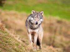 Regio moet 'wolfproof' worden