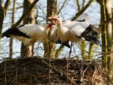 Staphorst wil geen nieuwe Natura 2000-gebieden, net als Hardenberg en De Wolden