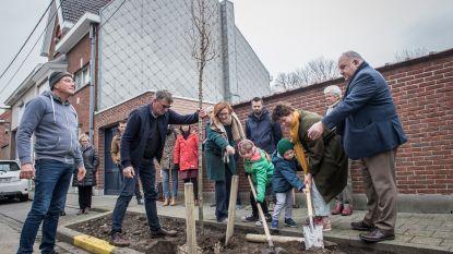 Boomaanplant kondigt vergroening West-, Schutters- en Sint-Sebastiaansstraat aan