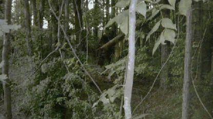 FBI geeft analyse van haren van vermeende Bigfoot uit jaren 70 vrij