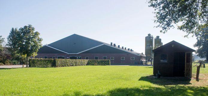 Het varkensbedrijf in Geesteren.