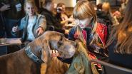 Hondenadoptiecafé vindt stek aan Godshuizenlaan (als er genoeg geld is)
