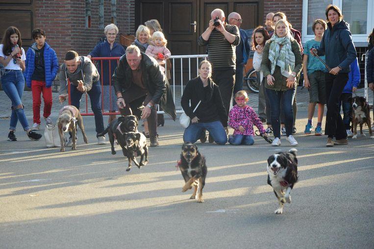 Enkele middelgrote honden zetten hun beste pootje voor.