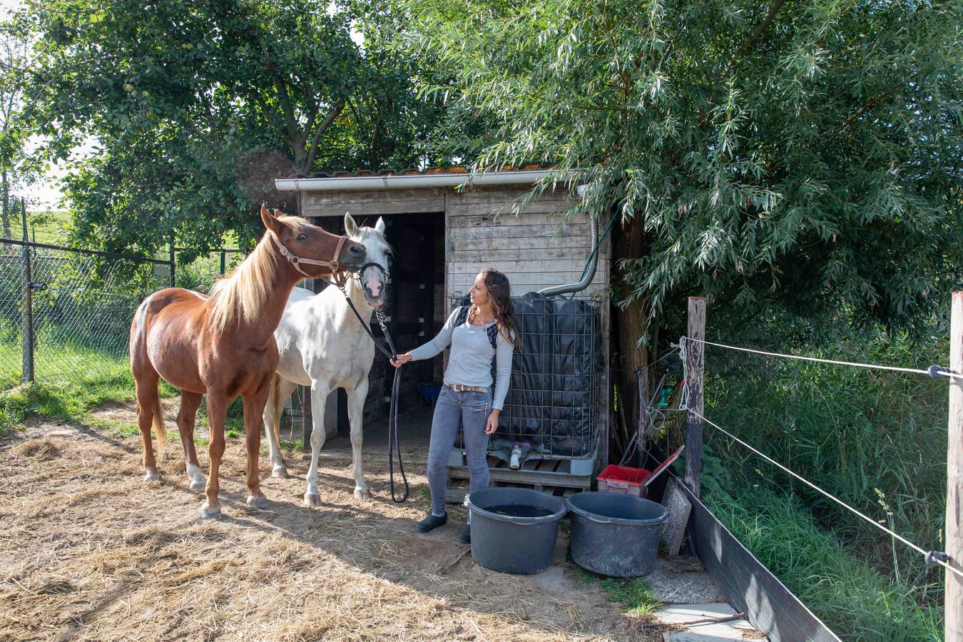ilyana Goud-Nelis met haar paarden Eagle en Robesh. De gemeente Reimerswaal wil het stalletje aan het Zusterzand bij Waarde niet legaliseren.