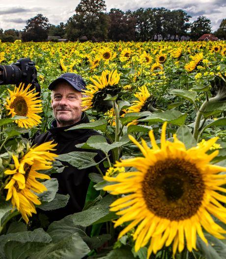 Duizenden zonnebloemen staan eindelijk in bloei; nu nog het juiste fotomoment