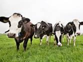 Kleilaagje op veen moet bodemdaling Groene Hart tegen gaan