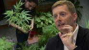 Waarom ex-marketingdirecteur AB Inbev zich op cannabis stort