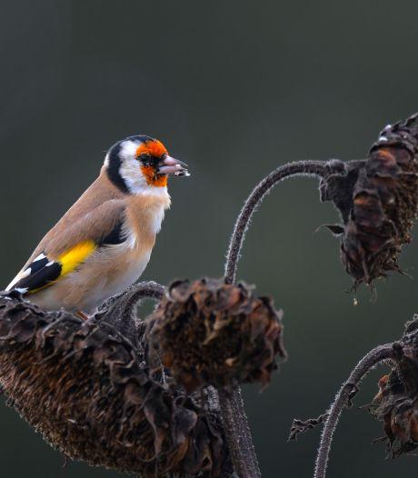Bloemrijke akkerranden in Twente zijn een veilig 'thuis' voor insecten en vogels