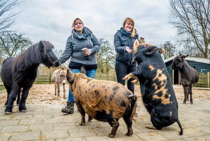 Kinderboerderij Tanthof heeft een dode pony waar politie onderzoek naar doet.