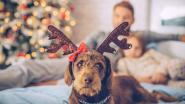 Maak van kerst de mooiste tijd van het jaar, ook voor je hond!