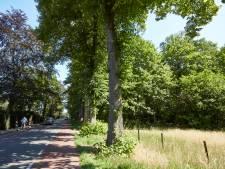 Gemeente Lochem wil opnieuw Barchemse Bos opofferen voor villa's, 'alsof we hier woningnood hebben'