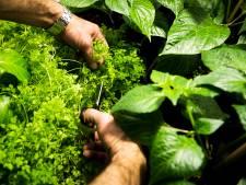 Growshop aan Kasteeldreef Drunen ontmanteld; bedrijfspand gesloten