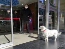 Onvoorwaardelijke liefde: hond wacht vijf dagen op baasje (68) bij ziekenhuis