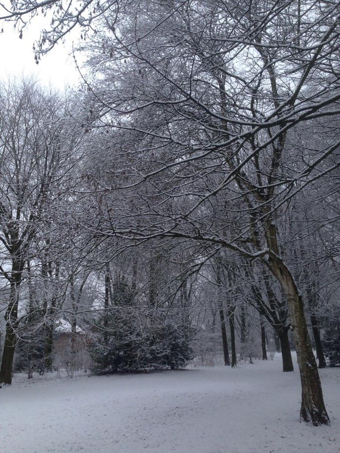 Sneeuw in Veldhoven.